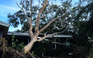tree-fell-on-roof
