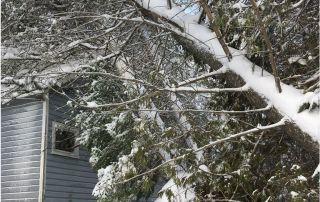 winter tree work